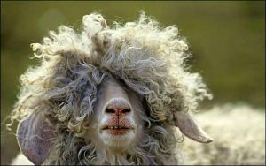 Having a bad hair day.