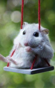 Swingin by to say Hi.